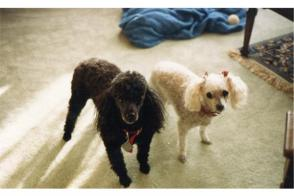 The Pets of my Life...