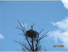 SL Rouge River Espray Nest
