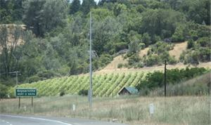 SL Sonoma Grapes