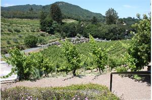 SL Winery