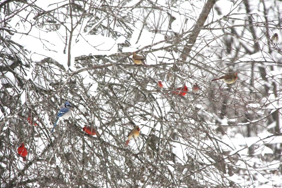 Christmas Blizzard Birds