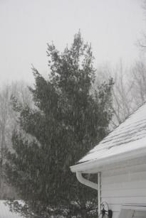 Snow Again 002