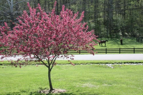 Country Spring 009