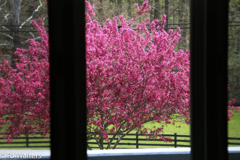 Springtime View