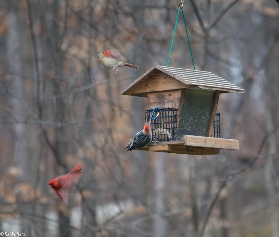Birds Aflight.jpg