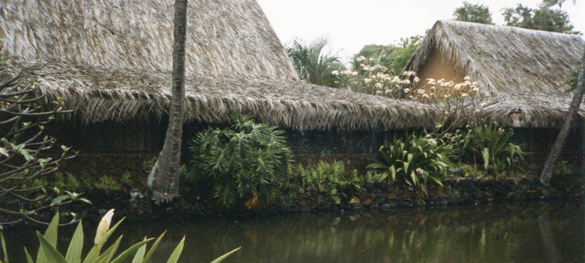 coco-palms-2-crop