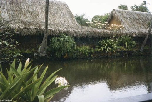 coco-palms-3
