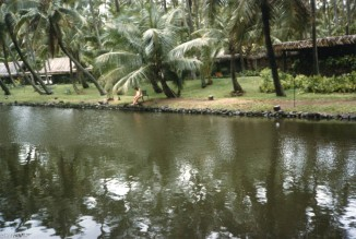 coco-palms-6