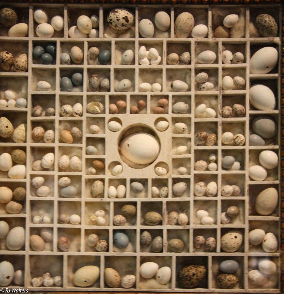 a-box-of-eggs