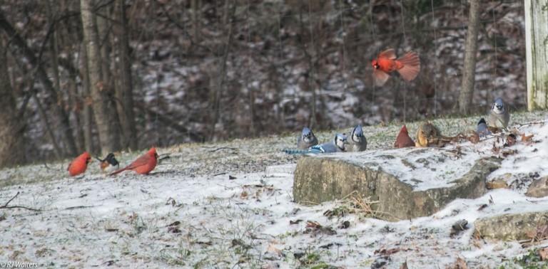 Feeder Birds.jpg