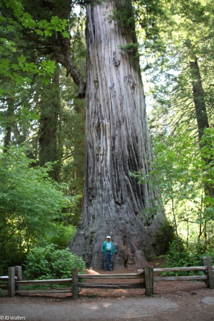Can't visit California without going to see the Redwoods.