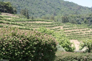 And of course there is the wine country.