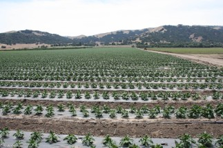 What would we do without the California farm belt?