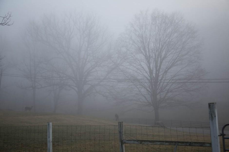 Misty Morning Deer.jpg
