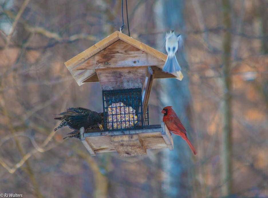 Bird Feeder Antics