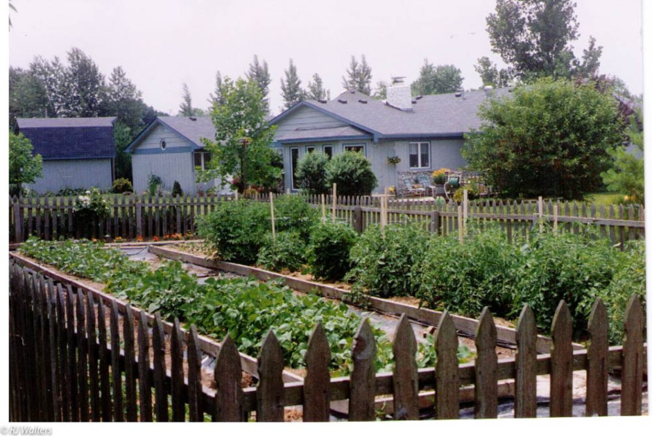 Veggie Gardens-2