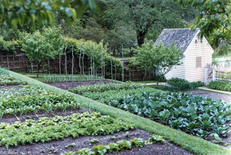 Veggie Gardens-4