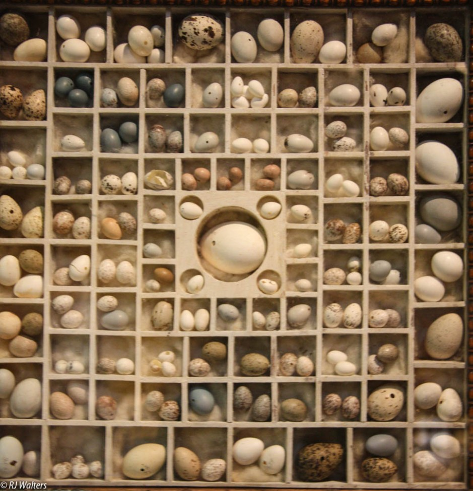 Marbles and Eggs.jpg