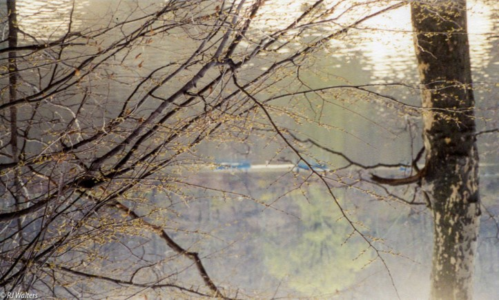 NYC Central Park.jpg