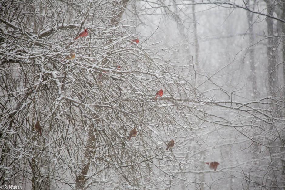 Xmas Snow.jpg