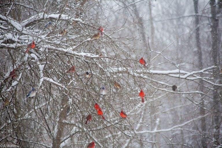 Jan 25 2018 Snow-2