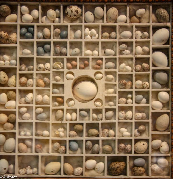 Box of Eggs.jpg